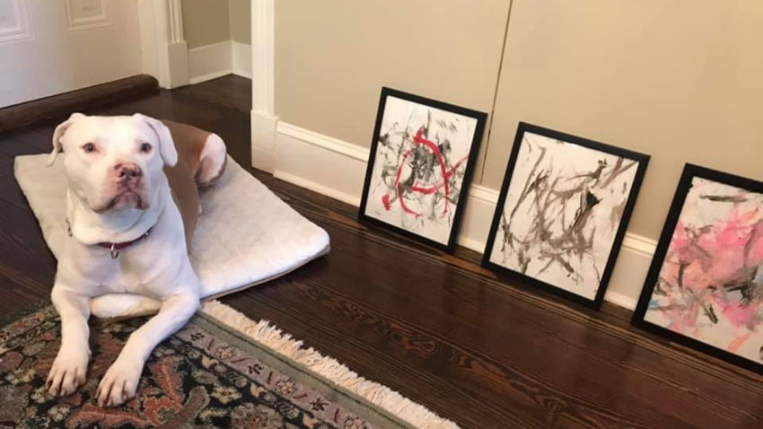 """An up-and-coming four-legged artist in Virginia has raised $4,000 for the Animal Welfare League of Alexandria. Under the nickname """"Ricasso,"""" the precocious 6-year-old Staffordshire terrier sold nearly 20 pieces in his debut collection."""