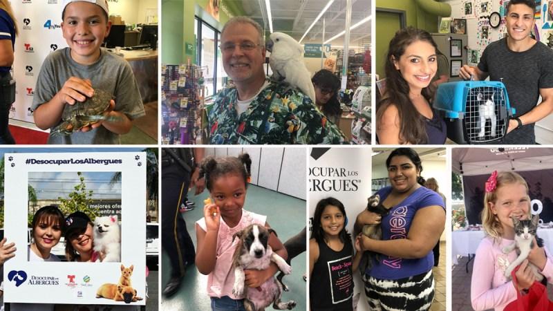 Misión cumplida: miles de sonrisas gracias a mascotas con un nuevo hogar