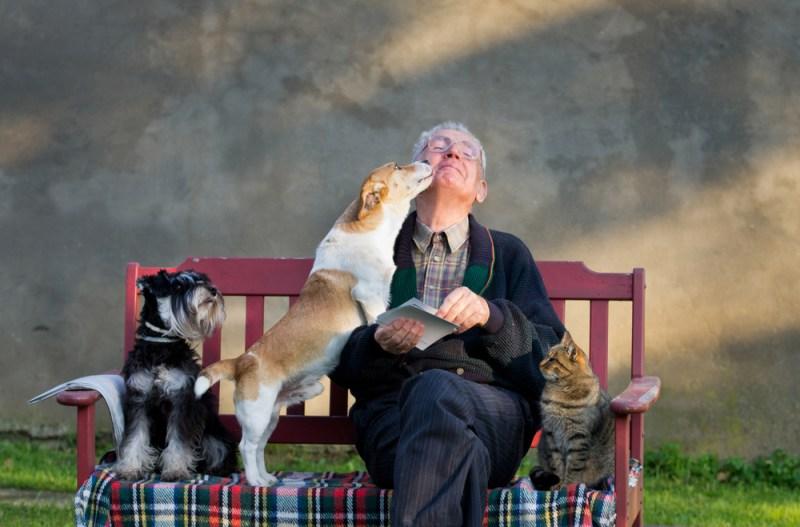 11 de las mejores razas de perros para personas de la tercera edad